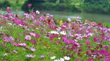 廣州這個溼地公園受歡迎到需要預約才能入園,倍受本地市民推薦