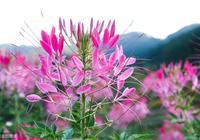 這10種夏日花卉,隨便1種就能美爆你的花園