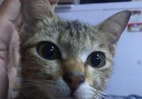 貓咪咬壞了主人的耳機線,它叼回一條蛇做補償,貓:不也是線嗎?