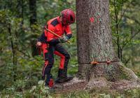 男子砍樹未設警戒標誌砸死路人 獲刑2年賠償52萬元