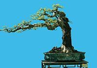 想要盆栽植物更繁茂,施肥方法要正確,這些經驗全都送給您!
