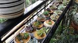 夏日小家,擺上綠植盆栽,搭配上自己心儀的花架,更愜意居家生活