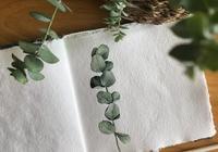 小清新水彩植物插畫,仙人掌,向日葵,馬蹄蓮……