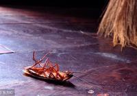蟑螂藥根本不用放,家裡放這個夏天一隻蟑螂都看不到,真是好辦法