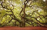 滿樹芬芳,盤點世界上最壯美的16棵樹