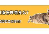 當你餵食貓咪時,是否也犯了這些錯誤呢?鏟屎官必備養貓常識!