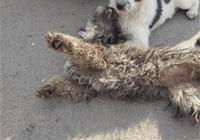 4只小狗在樹林裡被發現,2個月後狗子大變樣,原來狗子是白天鵝