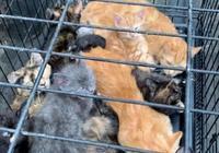 13只流浪貓擠在小籠子裡,女子不忍它們受苦,帶回家後還生了小貓