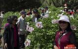 吉林市牡丹園的花開了,芳香四溢,引來眾人圍觀拍照,你去了麼