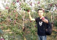 老家有3畝地,就別出城打工了,建議種這高產果樹,當年就賺錢
