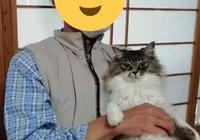 """真香外國版!我爸說""""絕對不養貓"""",但是帶貓回家後態度就變了"""