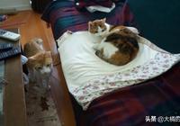 哭泣的小寶寶引來貓咪注意,鏟屎官用妙招哄寶寶,貓咪都看出神了