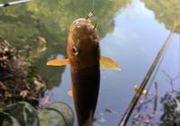 野釣清水河配什麼料好?