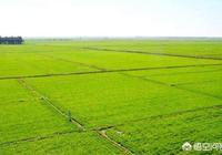 目前中國的三農問題,是走集約化、規模化好?還是維持現狀單幹好?為什麼?