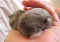 寵物篇-倉鼠11:如何與新買來的小倉鼠親近