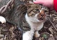 貓咪浪了一整天還沒回來,第二天出去找到後,主人抽自己一巴掌