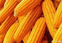 玉米走勢看點