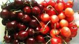 5對水果雙胞胎,第4種便宜的比貴的還好吃,你全吃過嗎