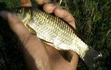 小夥草洞釣魚,日獲鯽魚上百條!祕訣原來是這樣……