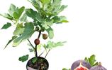 家有空地一定要種上這些果樹,沾土就活,吃上健康水果