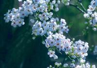 赴一場春水之約,擁一樹花開馨怡!