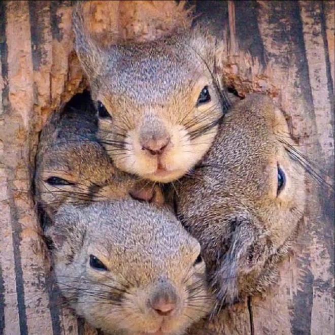 松鼠:來客人了,大家快出來!