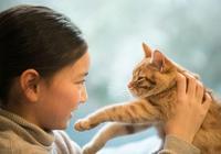 為什麼貓在中國沒氾濫?