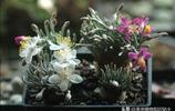冬日盆景展,園藝大神的傑作,你喜歡嗎?