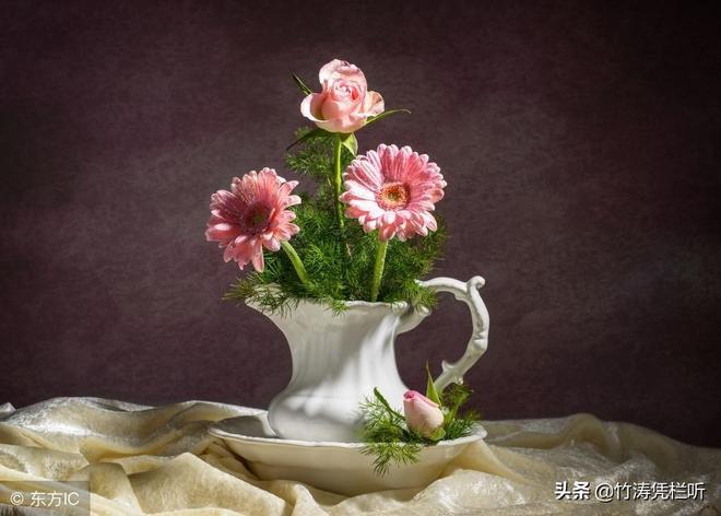 美麗茶花,詩情畫意