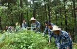 40多年來堅守,一個人一片林,林區面積由1.8萬畝增加到10.5萬畝