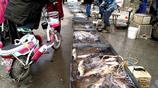 本地農村最大的淡水魚市場為啥大魚好賣?鰱魚草魚八九斤太平常