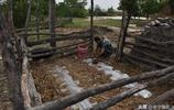 晉南一農民,羊欄旮旯中開墾巴掌大肥地,用鐵馬勺點水種菜稀罕