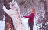 18歲生日禮物收到一隻老虎,俄羅斯名媛果然不一般