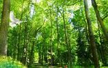 綠竹流水,綠竹孔雀,非常養眼的精美壁紙,喜歡的拿走吧