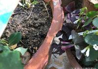 兩步教你把普通土變成花店都買不到的超讚營養土,種啥都好
