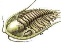 請問為什麼三葉蟲滅絕後沒有從單細胞進化出新的三葉蟲?