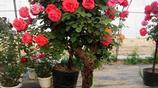 10種超美的爬藤植物,種上這一株,美翻了你文藝的家