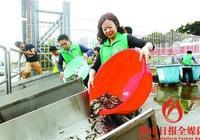 高明區舉行2017年江河增殖放流活動