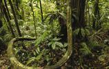熱帶雨林亞馬遜