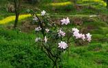 我的家在武陵山腹地,那裡群山環繞,景色優美