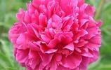 馬上就要新年了,搬幾盤花卉盆栽放陽臺,單調的冬天也能奼紫嫣紅
