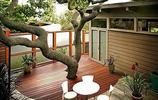 別墅小院,萬物生長,四季輪迴