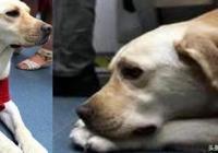 導盲犬乘坐地鐵,卻被乘客趕了出去,原因十分無奈!