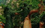 天津八仙山之遊,林木茂密,山深路險,景色迷人!