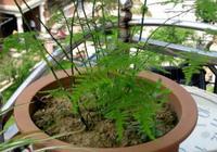 """這3種花,剪下的""""廢枝""""別浪費,插土裡就活,一長就是一大盆"""