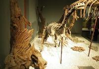 諸城恐龍化石