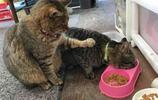 """""""你也配說宅?我才是真的資深宅貓!""""11張有趣貓咪圖讓你笑不停"""