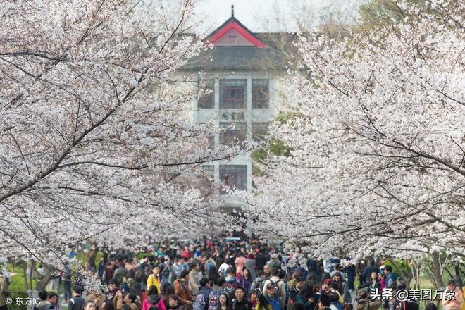 又是一年賞花季,南京這幾處的花驚豔了