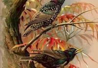 經典手繪,唯美效果,視覺震撼的《鳥之圖譜》!