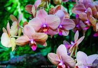 """別老用""""淘米水""""養蘭花,可以用用這種""""水"""",花朵數量能增加"""